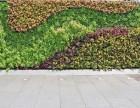 为什么一直都很重视广州室内植物墙的边幅修饰