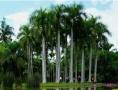 老挝万象、南俄湖、万荣、琅勃拉邦8日游