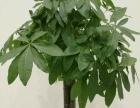金都园艺鲜花绿植花卉盆景批发室内外租摆园林绿化养护