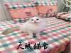 纯种布偶猫,猫舍繁殖