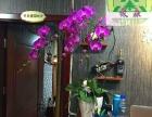 昆明花卉租摆、花卉租赁、绿化养护、绿化工程