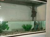 9成新漂亮鱼缸转让