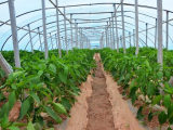 河北蔬菜大棚建设 哪里有提供效果好的蔬菜大棚