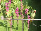 百鸟展租凭专业租凭鹦鹉表演鸵鸟展览租售百鸟展出租