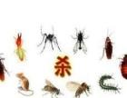 厦门优质除虫除蚁公司 灭蟑螂老鼠白蚁 专业尽责