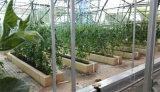 农业生态观光园设计-优惠的观光园和丰温室工程供应