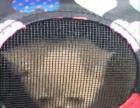 加菲猫2400元宠物店出售