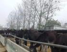 大量出售;毛驴 德州驴 三粉驴 改良肉驴等