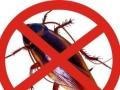 柳州赫鼎鸿虫害防治有限公司灭鼠灭蟑螂灭白蚁