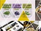 烟台工业产品造型设计-自然系设计