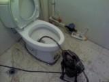 临海专业疏通各种下水道 管道高压清洗 抽化粪池 阴井