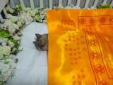 寵物殯葬,找安嘉寵物火化,24h服務,可上門接免費,價格透明