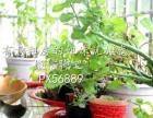 禹州枫景苑 1室1厅 55平米 精装修