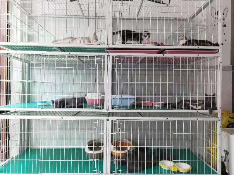 广州宠物医院宠物销售宠物美容寄养