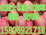 山东红富士苹果价格       5g