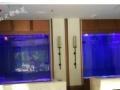 泰州鱼缸厂家办公室水族箱 生态鱼缸 水族 玻璃鱼缸