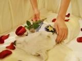 周浦寵物火化寵物殯葬寵物善終動物尸體無害化處理