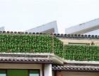 仿真植物墙 明筑为您打造高品质生活