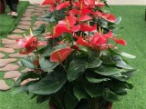 苏州绿植租赁植物租赁盆栽租赁花卉租赁免费上门看场地