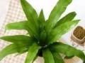 绿植租摆 出售 健康 自然 优雅
