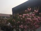 淄博市周村西外环好生镇 厂房 3300平米