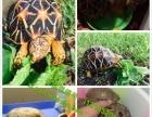 白城批发零售萌宠类、冷血类、爬虫类、宠物龟、爬虫用品、龟药