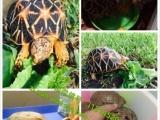 七台河批发零售萌宠类、冷血类、爬虫类、宠物龟、爬虫用品、龟药