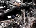 苏州阴沉木值几百万是真的吗到哪里交易