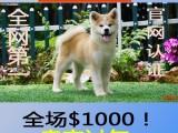 直销精品幼犬 品质保证,血统纯正,欢迎上门挑选狗狗 !
