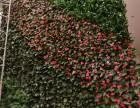 公司主营立体绿化,防真花植物墙,生态景观工程