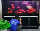 罗湖东门专业上门鱼缸护理 开缸消毒 水族箱托管 鱼饲料出售