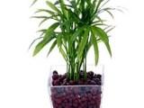 富阳绿植公司,富阳植物租赁,富阳办公室花卉出租公司