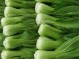 厂家直销2018新款多规格广州蔬菜配送公司