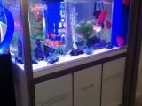 深圳罗湖那里有清洗鱼缸的