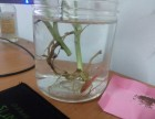 小鱼的进化论-惠州北大青鸟小故事