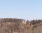 建安镇 林地出售350亩