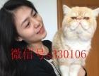 出售 英短 美短 波斯猫 加菲猫 蓝猫 包纯种健