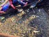 趣养鱼合作渔场工人们都经验十足,眼疾手快,
