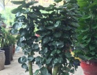 绿化植物租赁、销售、养护、绿化工程
