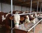 大量出售;小毛驴 德州驴 三粉驴 肉牛犊 西门塔尔