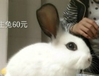 万秀村出自家养的兔子