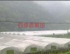 【采摘推荐】杭州休闲农家乐活动水果葡萄自由采摘批发