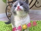 专注纯种名猫繁育