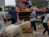 东升禽苗孵化公司供应价位合理的珍珠鸡苗_南宁鸡苗