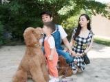 纯种的贵宾犬适合小孩养吗 性格怎么样
