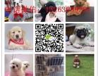 天津犬舍直销世界各类名犬 支持上门看狗加微信有折扣