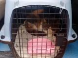 温州宠物托运回家 免费上门接送