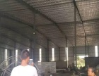 标准钢结构1000平高10米招租周边无居民居住