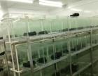 江海礼乐--小型热带观赏鱼温室转让