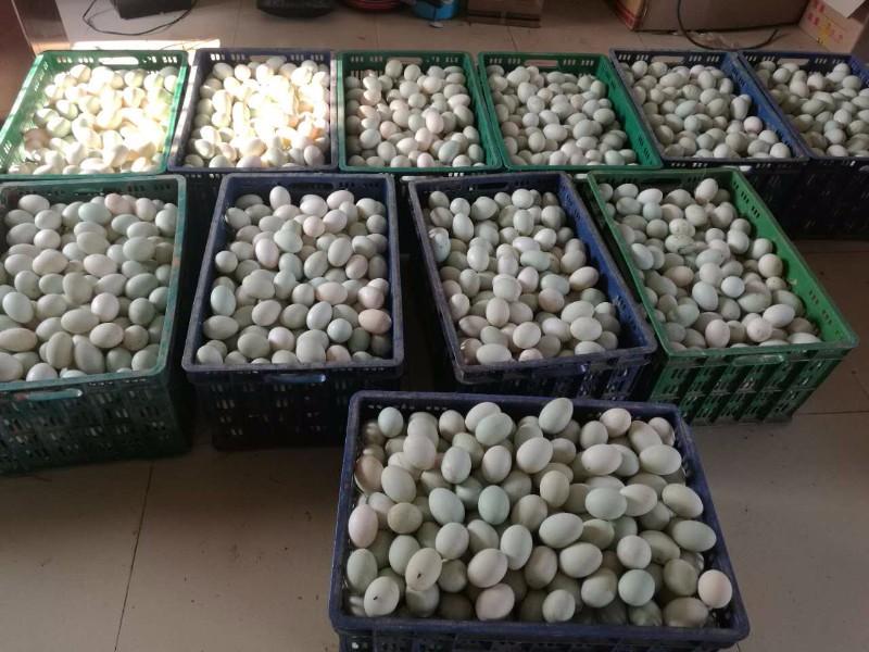小森林农业发展集团(中国广西来宾兴宾公司)